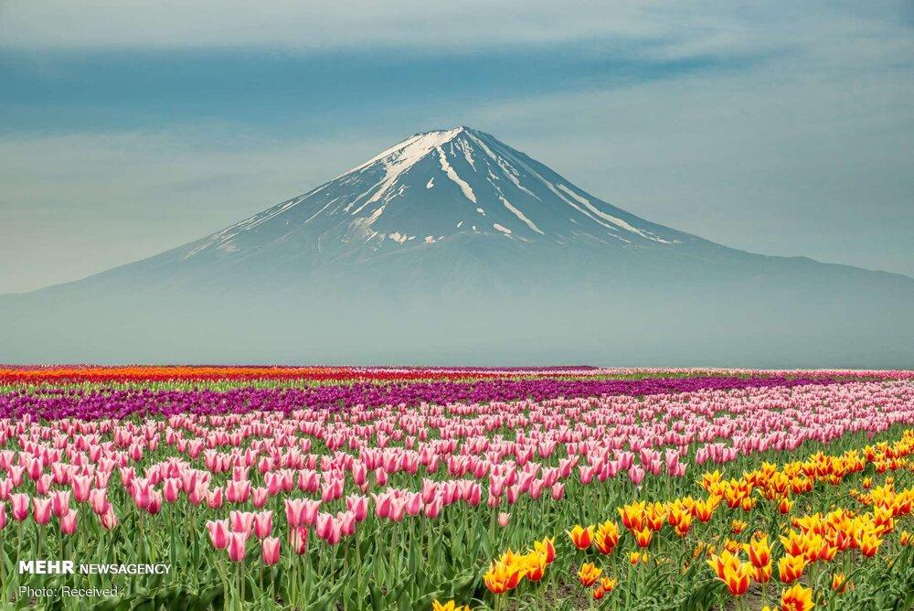 Frühling im Iran