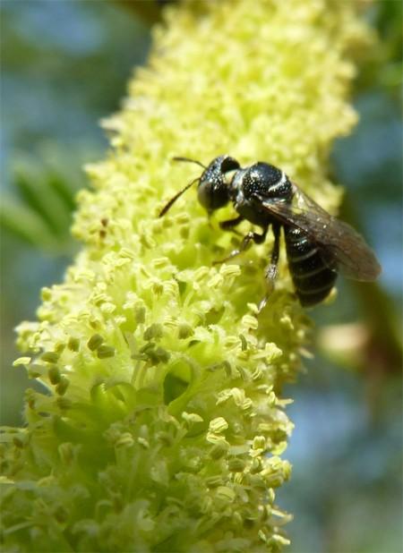 Cashaw flower