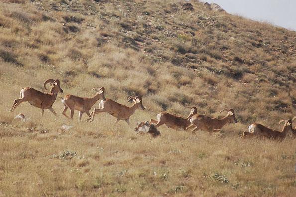 Bamo national park