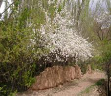 iran_kashan_abyaneh