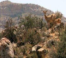 iran_shiraz_bamou_national_park