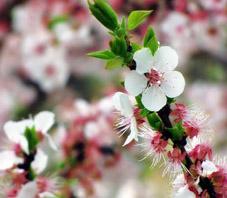 iran_shiraz_thousand_springs_garden