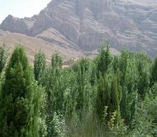 iran_fars_ghalat