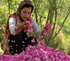 iran,fars,meiman,golab,distillation