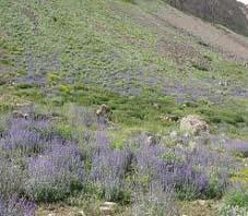 iran_manzandaran_samamus_mountain