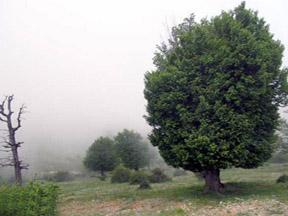 Iran, Sharoud