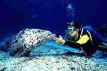 Iran,Kish,under the water life